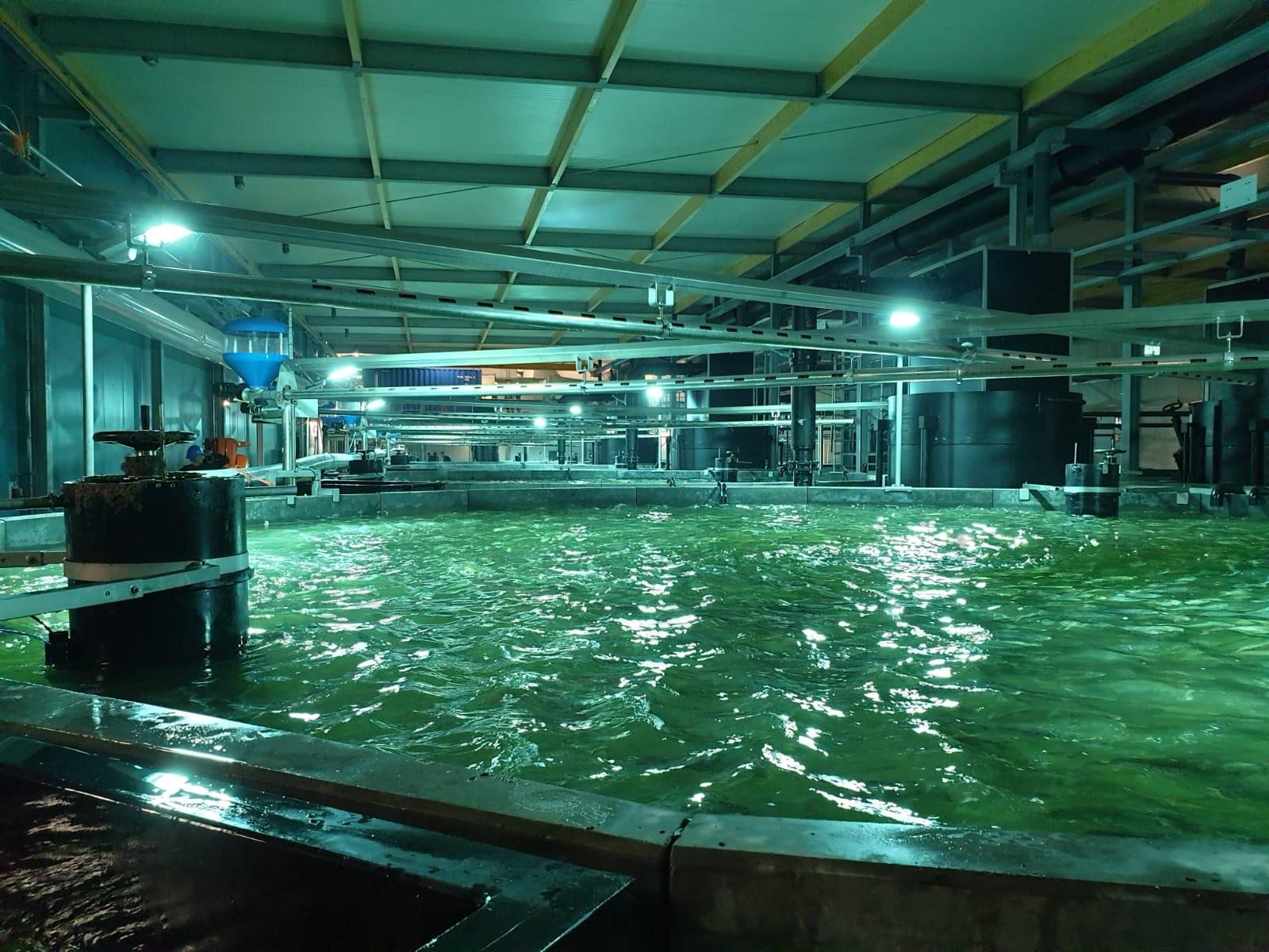 Viskwekerij project: Verwarming voor bassins